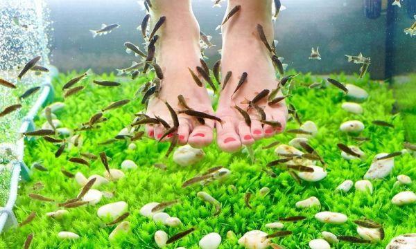 Удивительный пилинг ног рыбками