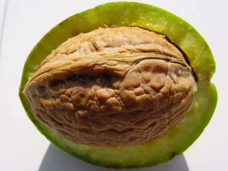 Настойка грецкого ореха на для удаления волос