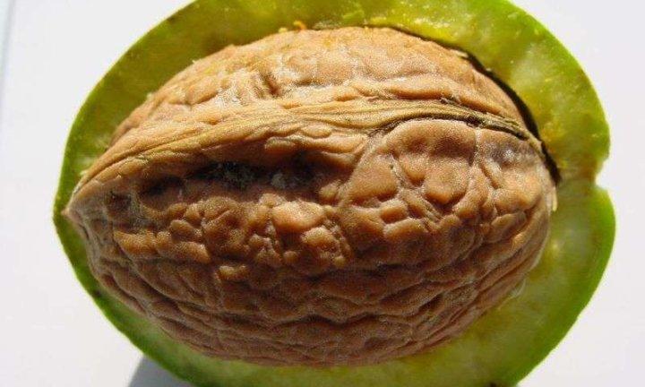 Грецкий орех от нежелательных волос